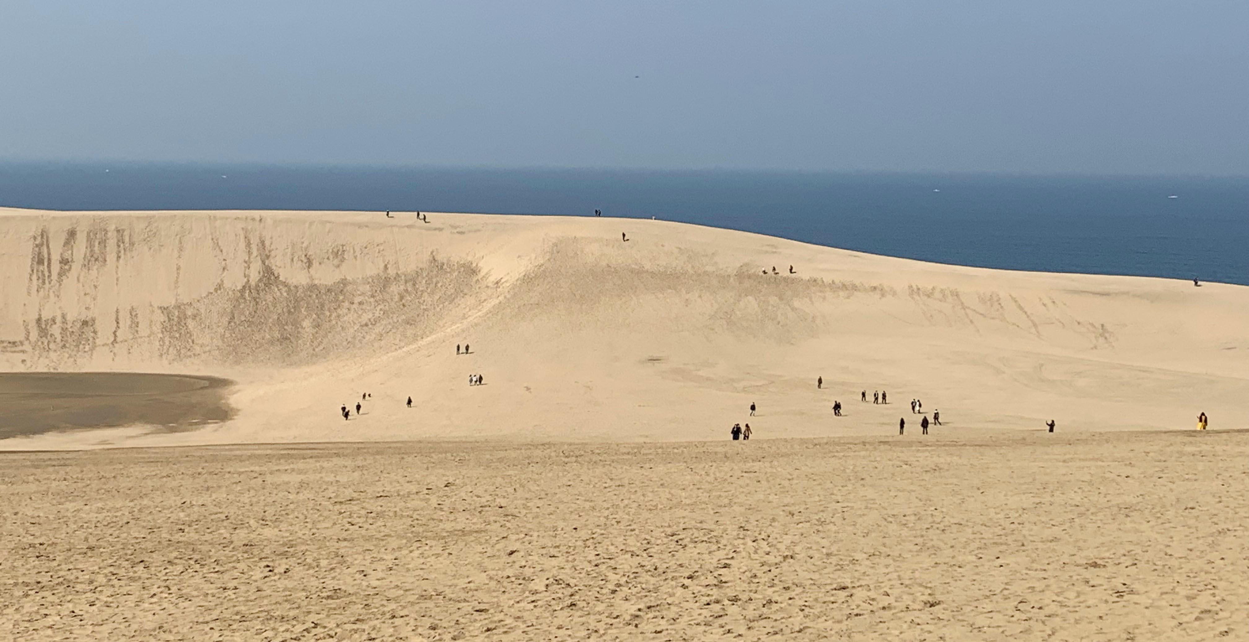 鳥取満喫!鳥取砂丘と二十世紀梨ツアー催行!