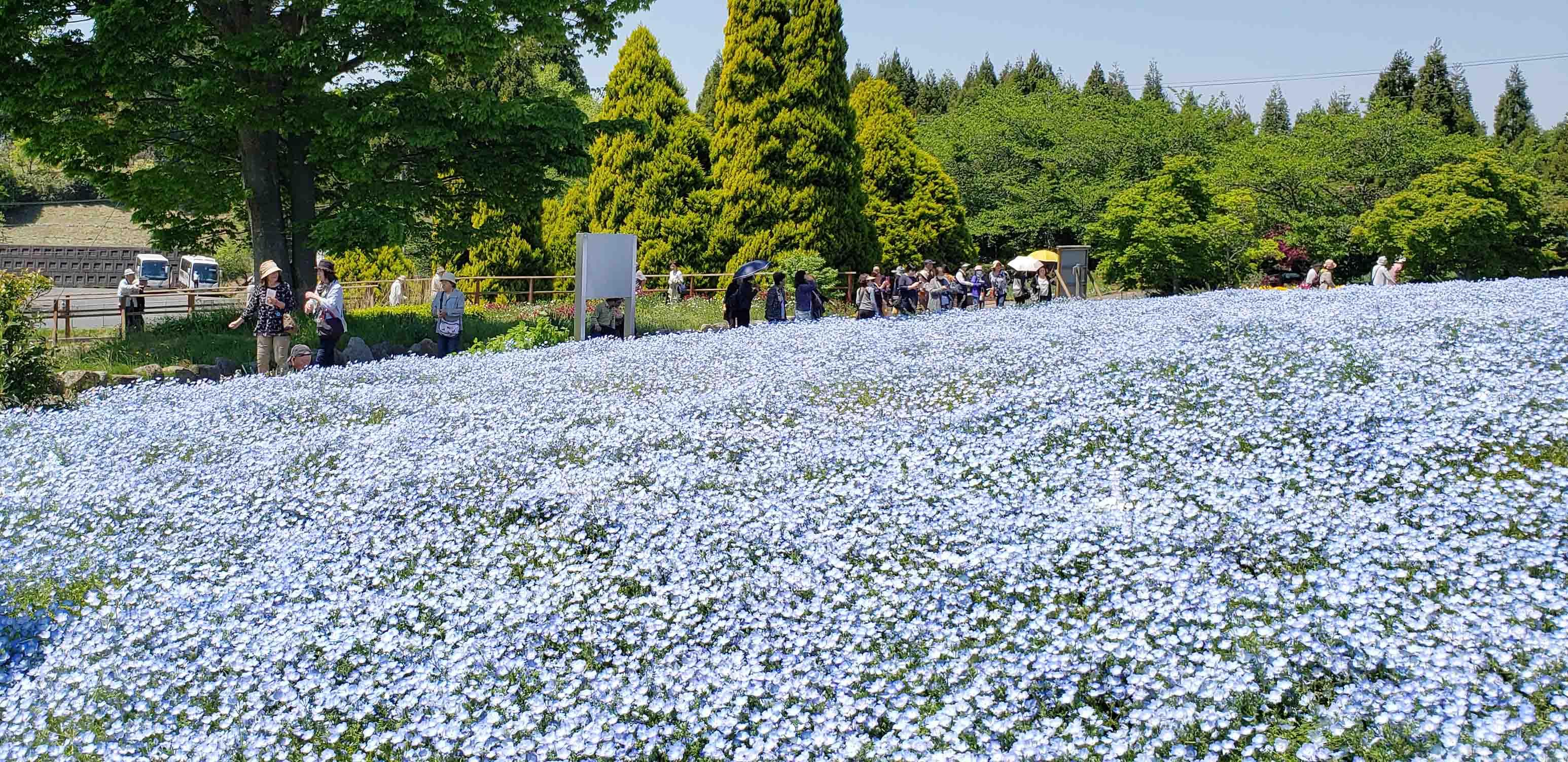 福島いわき 花と豪華海鮮チラシツアー催行!