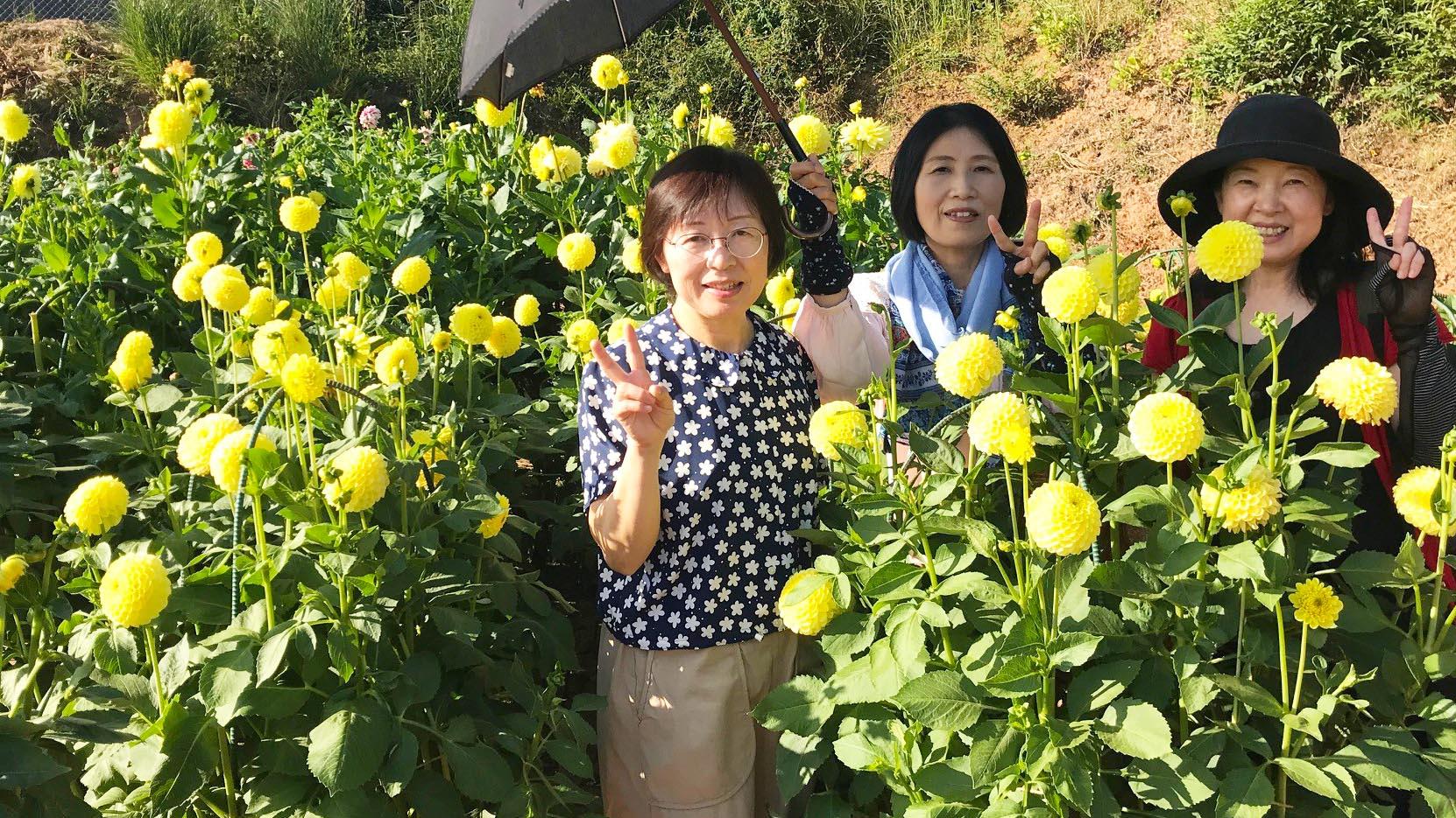 広島 世羅高原農場ダリア祭2019ツアー催行!